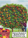 A Fruit Salad Tree! Different fruits grow on one tree.