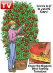 A Tomato Tree?!