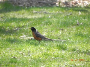 The only wildlife I saw was this robin. And she wasn't even in the woody area.