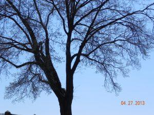 cunningham park 4272013 042